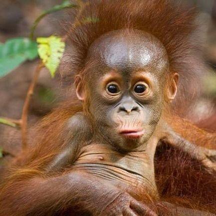 Opička.jpg